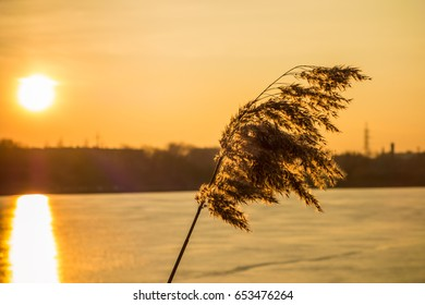 Sunset reed