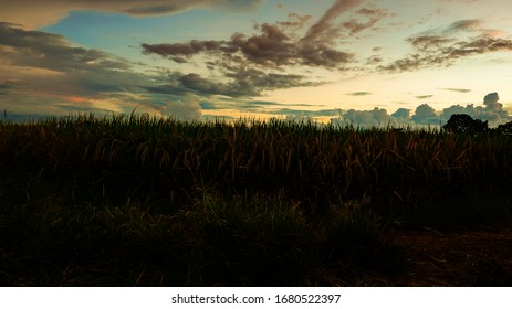 sunset in the rice field area with a beautiful view of the sky in the afternoon. Majalengka, West Java, Indonesia