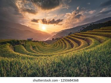 sunset rice terrace Mountains in Mu can chai, Vietnam