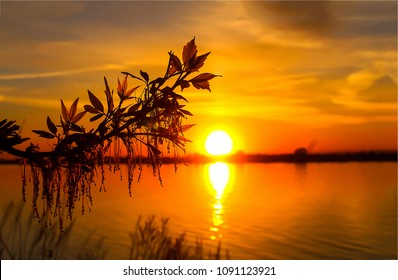 Sunset river horizon silhouette branch landscape. River sunset horizon. Sunset river panorama