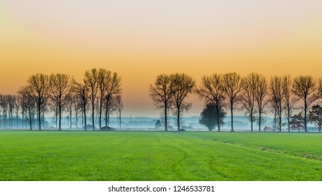 Sunset with row of trees  at rural Dutch agriculture area