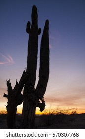 Sunset with saguaro (Carnegiea gigantea), silhouette, an arborescent (tree-like) cactus. t is native to the Sonoran Desert in Arizona, the Mexican State of Sonora, and the to California.