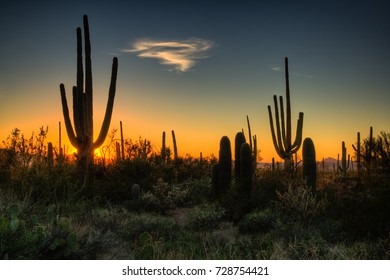 Sunset at Saguaro National Park, AZ, USA