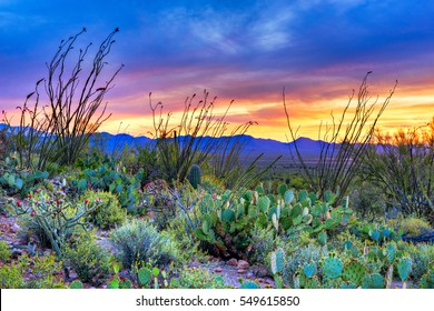 Sunset in Saguaro National Park near Tucson, Arizona.