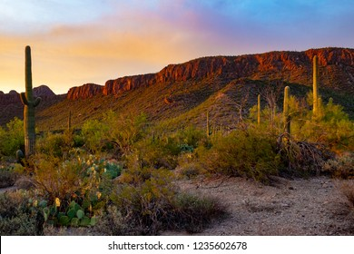 Sunset in Saguaro National Park west of Tucson, Arizona. Prickly pear cactus, cholla cacti, ocotillo bushes, palo verde and mesquite trees with mountains and rocky cliffs in the distance lit up. 2018.