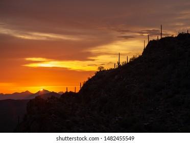 Sunset With Saguaros On Mountain