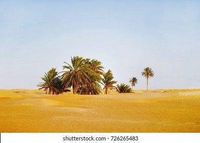 Sunset in Sahara desert. Beautiful landscape with sand dunes and palm trees in oasis. Tunisia.