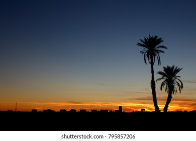 Sunset of  sahara desert with palm tree in morocco