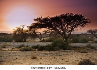 Sunset at the Savannah like Arava in the Negev desert, Israel