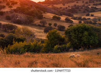 Sunset scene over the hills of Samothrace Island in Greece with sheep grazing against colorful trees