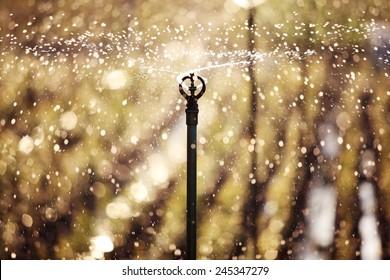 sunset scene of water sprinkler