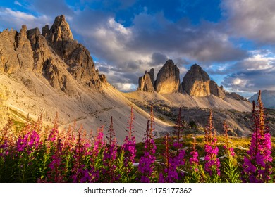 Sunset scenery at Tre Cime di Lavaredo, Italy, with purple Epilobium flowers