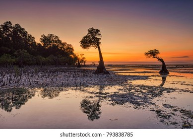 Sunset scenery at Walakiri Beach in Sumba Island, Indonesia, with its beautiful mangrove trees.