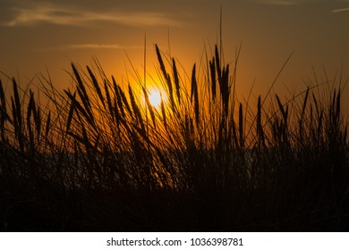 Sunset at the sea with grasses in the foreground
