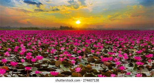 Sunset at Sea Red Lotus
