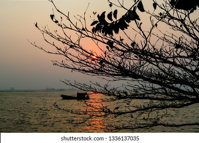 Sunset at sea with silhoette of tree foreground