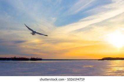 Sunset Seagull II