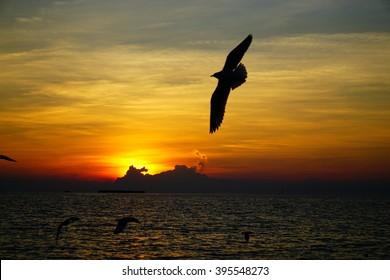 Sunset and seagulls