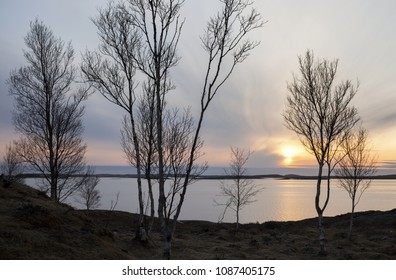 Sunset at seaside, birch trees against light. Early spring in North-Eirope.