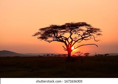 sunset at serengeti national park, tanzania