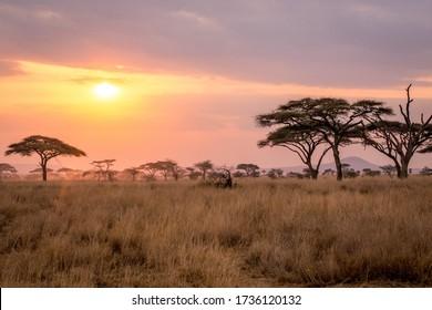 Sunset in Serengeti National Park, Tanzania, july 2017