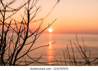 Sunset at the shore side. Red sun through trees.
