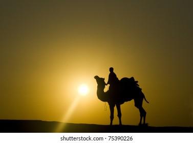Sunset Silhouette of Camel in the desert