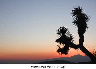 sunset silhouette - Joshua Tree National Park - USA