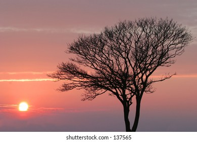 Sunset with silhouette of leaf-less tree