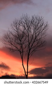 Sunset with silhouette of leaf-less tree , Black twilight branches