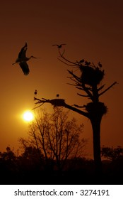 Sunset silhouette of many storks in nests and one flying by.