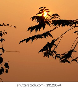 sunset with silhouette plants