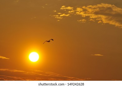 sunset with silhouette of a seagull in the sky