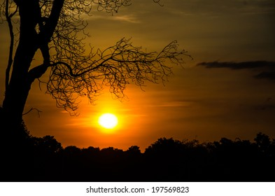 sunset with silhouette of tree