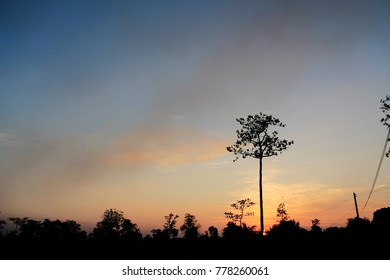 sunset with silhouette tree
