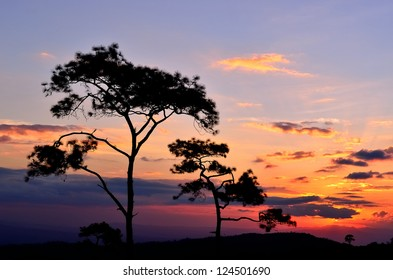 The Sunset of Silhouette Tree Scene 3