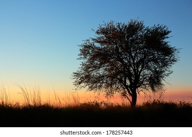 Sunset with silhouetted African Acacia tree, southern Africa