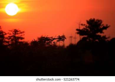 Sunset with silhouettes of trees.