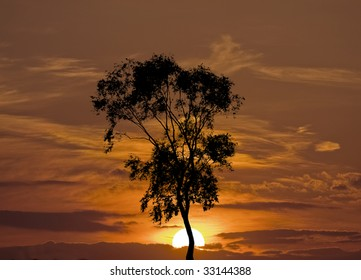 Sunset and the single tree