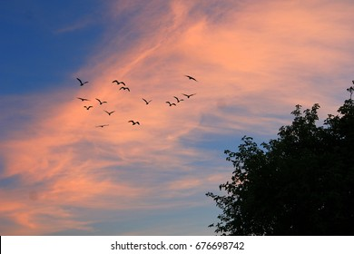 Sunset Sky with Birds