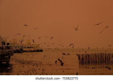 Sunset sky with seagulls in thailand