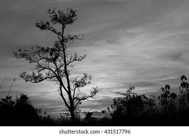 sunset sky with tree in front background in Thailand , black and white tone
