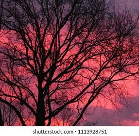 Sunset sky tree pink