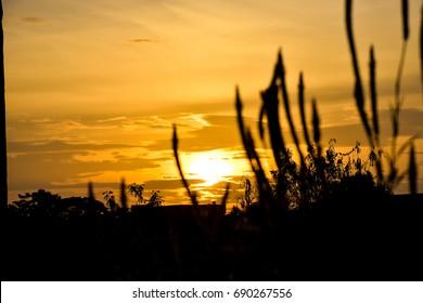 Sunset sky Yellow, orange On Shadow black grass