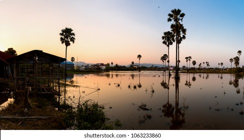 Sunset with small pond and palm trees growing in. Kampot City, Cambodia