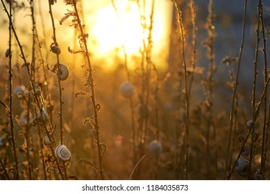 Sunset with small snail shell on field