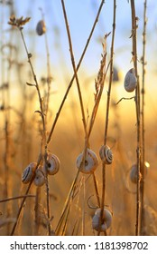 Sunset with snail shell on autumn field