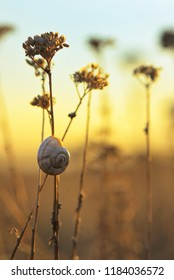 Sunset with snail shell on field