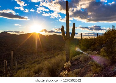 Sunset in the Sonoran Desert winter of 2018. Icon of the Southwest a Saguaro cactus stands tall on a hill covered in cholla and other species of arid plant life. Blue sky, sun rays. Tucson, Arizona.