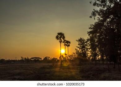 Sunset, sugar palm